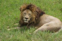 Wild Root Safaris and Adventures, Arusha, Tanzania