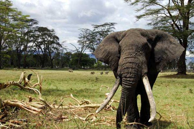 African Jambo Safaris, Arusha National Park, Tanzania