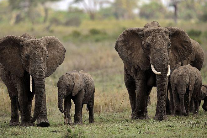 Jumbo Tours and Safaris, Arusha, Tanzania