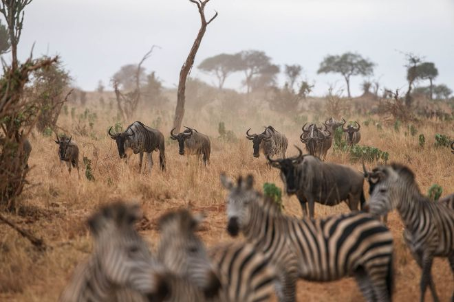 Love and Dove Africa, Arusha, Tanzania