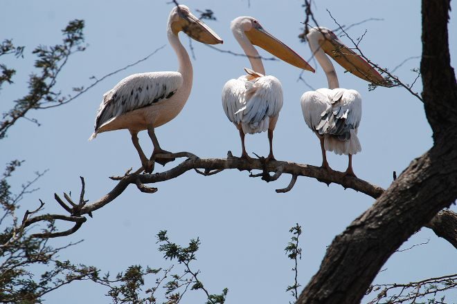 Napanda Tours and Safaris, Arusha, Tanzania