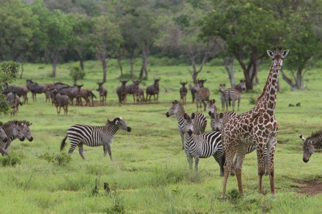 Selous Game Reserve, Selous Game Reserve, Tanzania