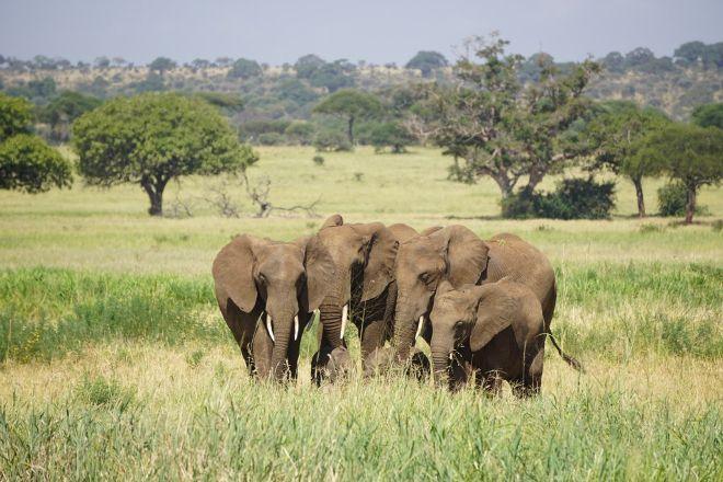 Serengeti Joy Tours, Arusha, Tanzania