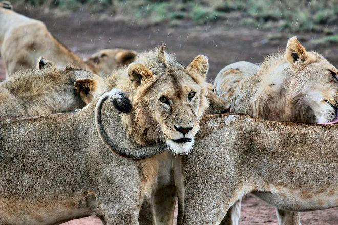 Tanzania Horizon Safaris, Arusha, Tanzania