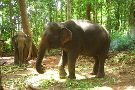 Ban Chang Thai - Elephant Camp