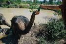 Elephant Jungle Sanctuary Phuket Offices