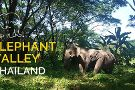 Elephant Valley Thailand