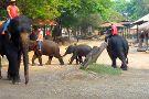 Mae Taman Elephat Camp