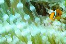 Paradise Diving Asia