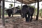 Save Elephant Foundation - Surin Project