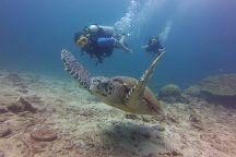 Beachfront Divers