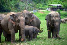 Elephant Jungle Sanctuary Chiang Mai