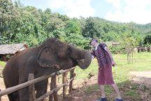Elephant Keeper Maewang