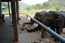 Maeklang Elephant Conservation Community, Mae Win, Thailand