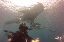 Scuba Diving Fun, Chalong, Thailand
