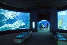 SEA LIFE Bangkok Ocean World, Bangkok, Thailand