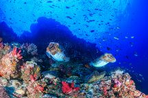 Similan Diving Safaris, Khuk Khak, Thailand