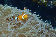 The Dive Ao Nang, Ao Nang, Thailand