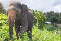 Thong Elephant Sanctuary Chiang Mai