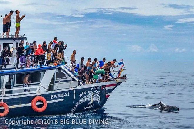 Big Blue Diving Koh Tao, Koh Tao, Thailand