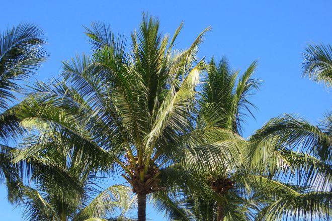 Coconut Beach, Khuk Khak, Thailand