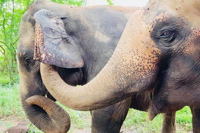 Elephant Haven, Sai Yok, Thailand