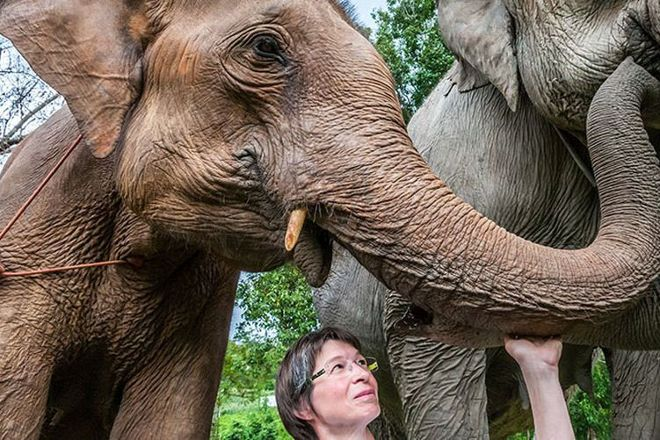 Elephant Special Tours, Chiang Mai Province, Thailand