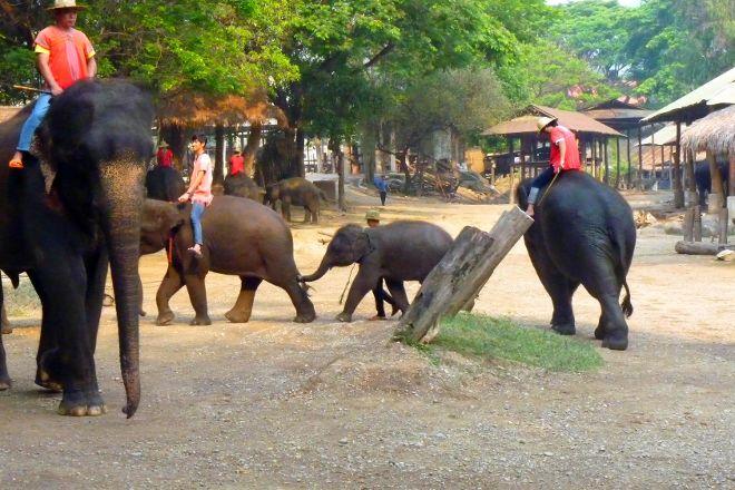 Mae Taman Elephat Camp, Mae Rim, Thailand