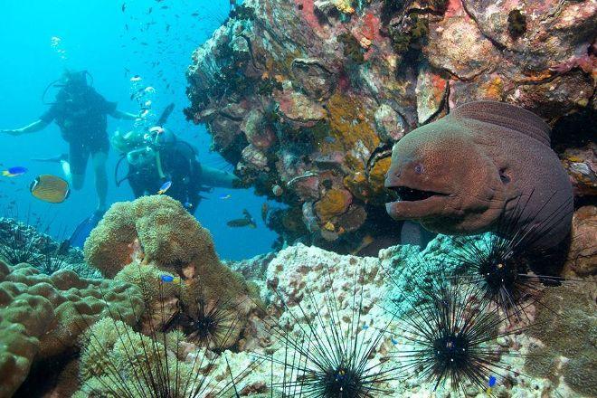 Roctopus Dive, Koh Tao, Thailand