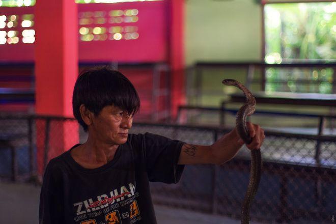 Samui Snake Farm, Ko Samui, Thailand