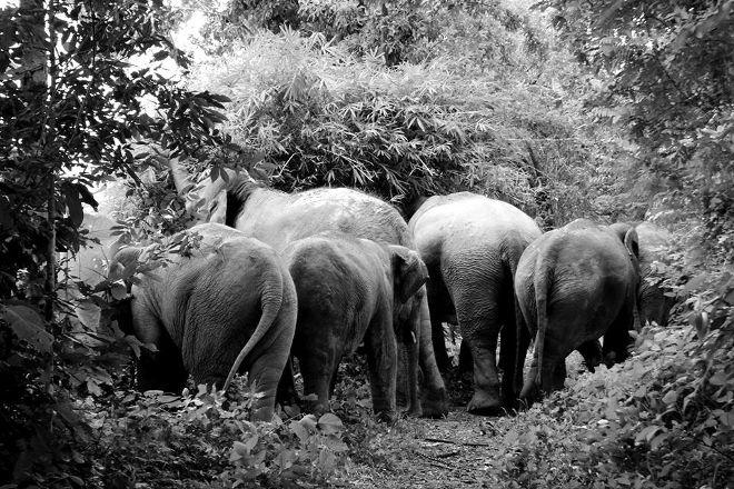 Sappraiwan Elephants Sanctuary, Wang Thong, Thailand