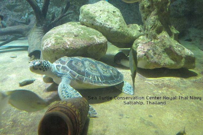 Sea Turtle Conservation Center, Sattahip, Sattahip, Thailand