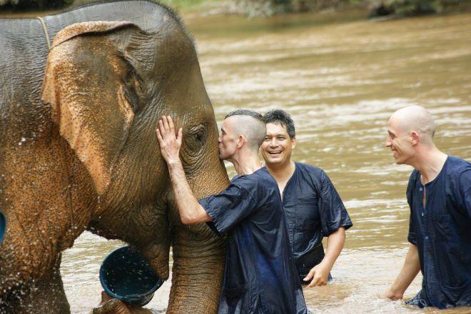 Siam Elephant, Chiang Mai, Thailand