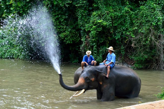 Thai Elephant Conservation Center, Lampang, Thailand