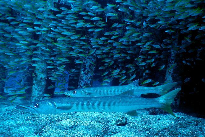 The Dive Academy, Bophut, Thailand
