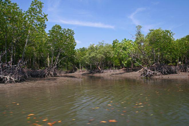 Thung Yee Pheng Mangrove Forest, Ko Lanta, Thailand