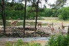 Burgers' Zoo and Safaripark