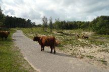Duinreservaat Castricum, Castricum, The Netherlands