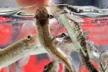Four River Fish Spa Haarlem