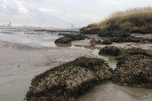 Het Verdronken Land van Saeftinghe, Nieuw-Namen, The Netherlands
