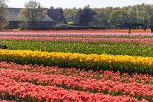 Old Zandvliet Farm, Lisse, The Netherlands
