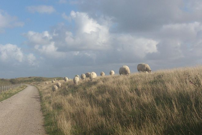 Nationaal Park Duinen van Texel, Texel, The Netherlands