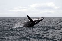 Tongan Expeditions Dive & Whale Watching