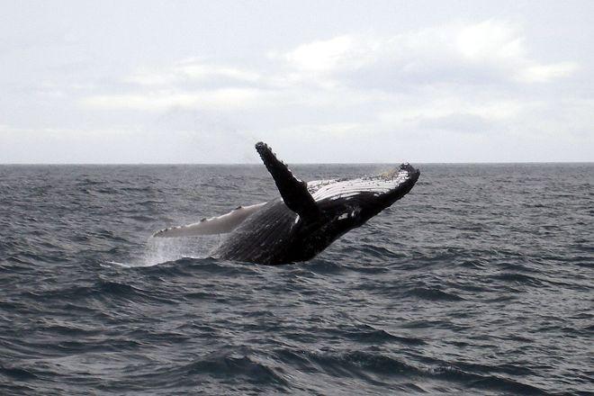 Tongan Expeditions Dive & Whale Watching, Neiafu, Tonga