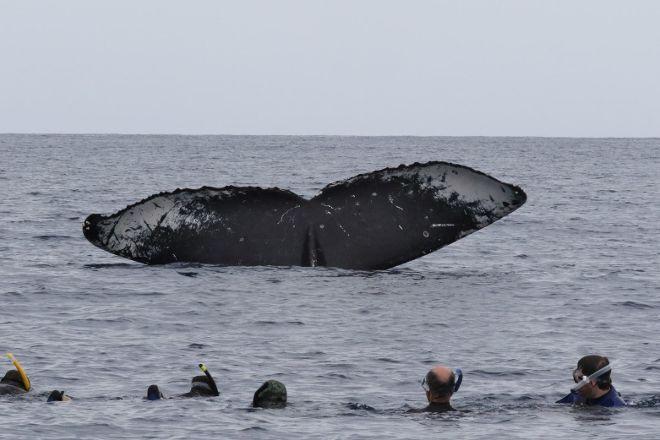 Whale Dive Tonga, Nuku'alofa, Tonga