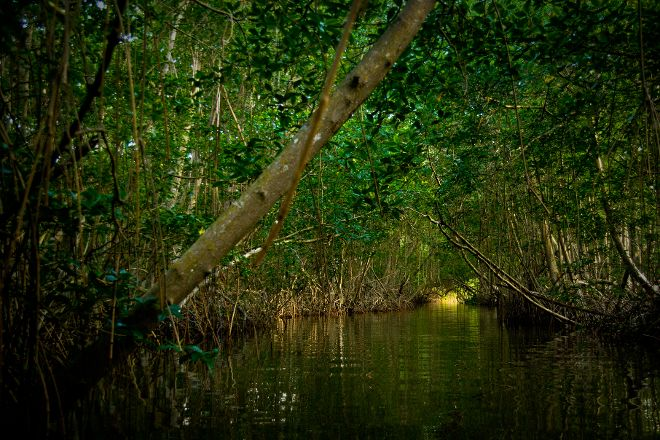Caroni Swamp, St. Ann's, Trinidad and Tobago