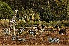 Izmir Wild Life Park