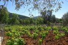 Vinbodrum