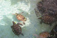 Coral World Ocean Park, Smith Bay, U.S. Virgin Islands