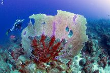 Sweet Bottom Dive Center, St. Croix, U.S. Virgin Islands